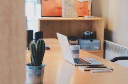 art-business-cactus-chair-265101